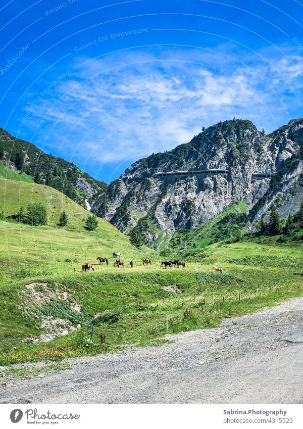 A group of horses on the way in nice weather with view to the Flexenpass in Stuben am Arlberg, Vorarlberg, Austria pass road Tunnel Mountain Exterior shot