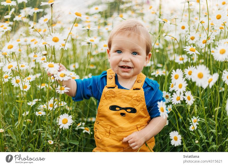 A blue-eyed and fair-haired boy stands in a flowery meadow with chamomile flowers and smiles child field beautiful smiling summer happy fun joy cute green