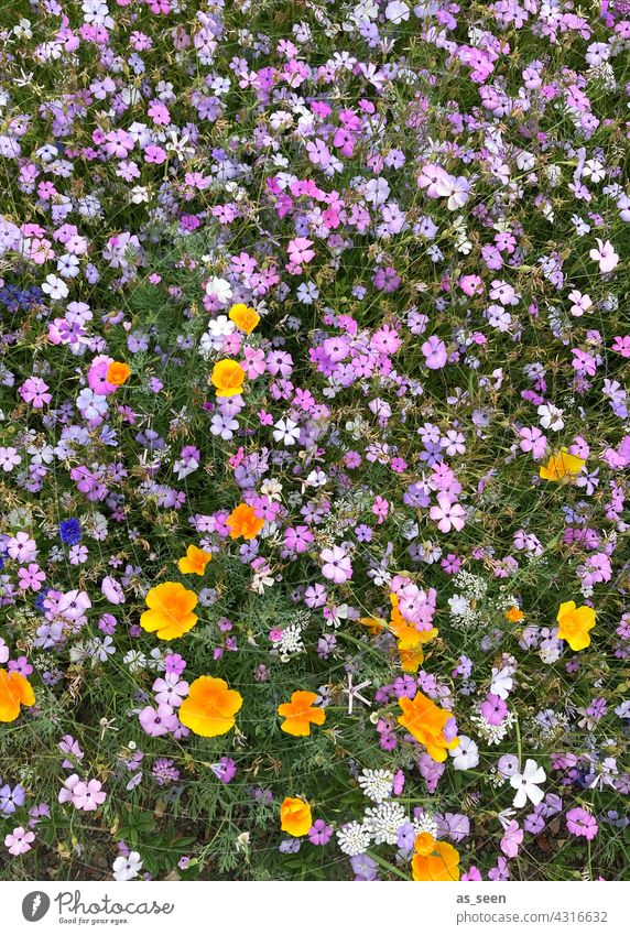 Flower meadow from above flowers Meadow Orange Yellow purple White Green Bird's-eye view Nature Blossom Plant Summer Garden Blossoming Colour photo