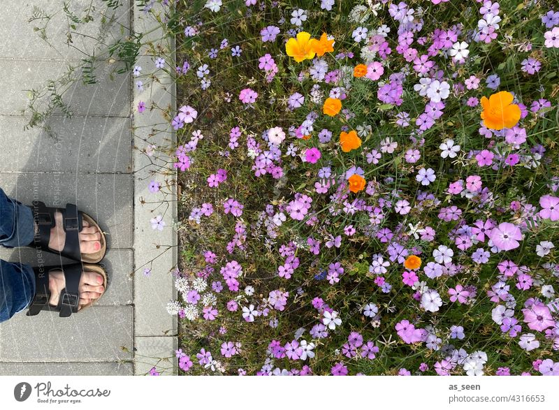 In contemplation of the flower meadow flowers Meadow Orange Yellow purple White Green Bird's-eye view Nature Blossom Plant Summer Garden Flower Blossoming