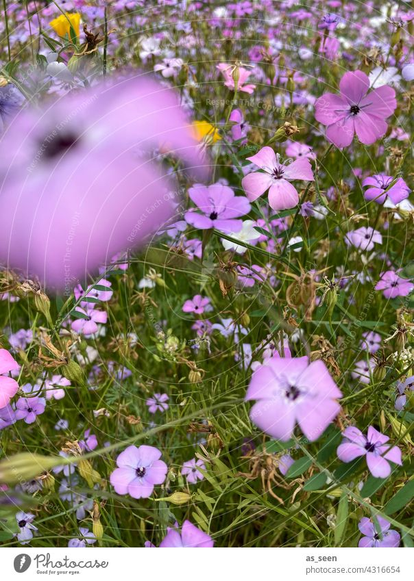 In the flower meadow flowers Meadow Orange Yellow purple White Green Bird's-eye view Nature Blossom Plant Summer Garden Flower Blossoming Colour photo