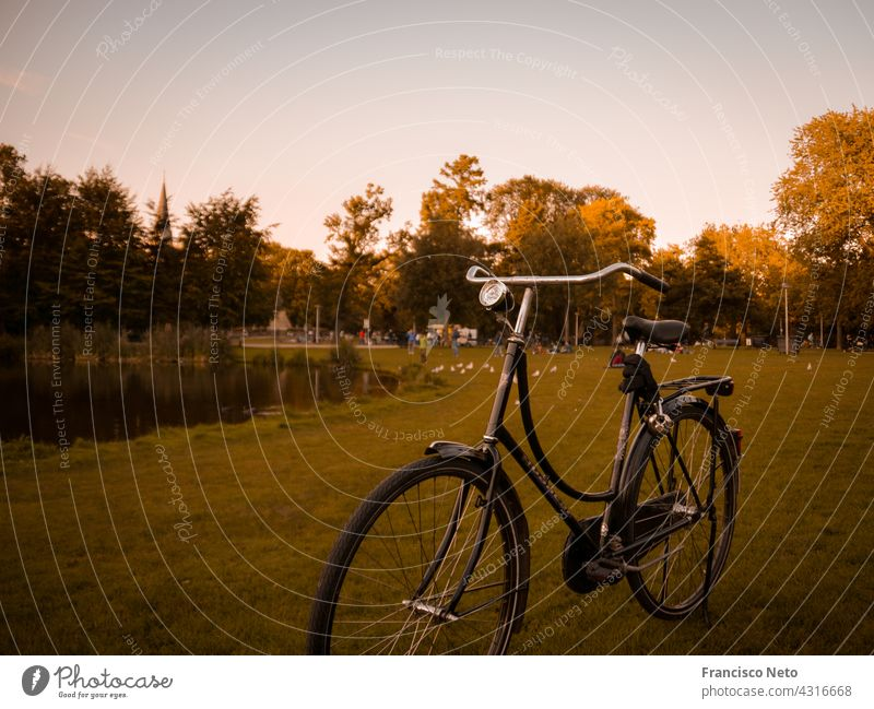 Bike in Amsterdam bike bicycle amsterdam automn fall Transport Netherlands Colour photo Europe Street Exterior shot urban park City Vacation & Travel