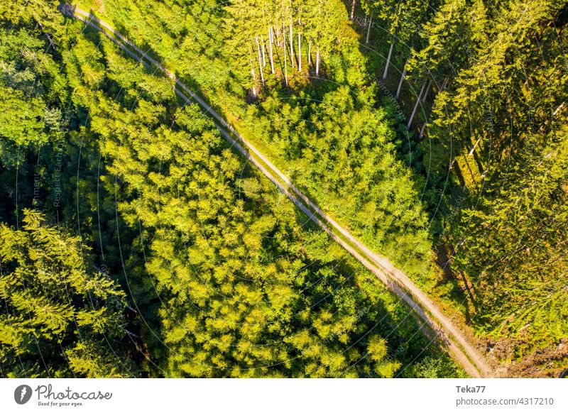 The forest path Forest off Hiking Walking Nature trees from on high Earth Summer Aerial photograph