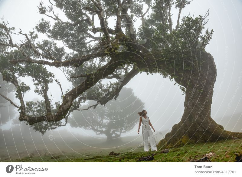 Woman with white dress in cloud forest White Fairy tale Elf pretty Human being Dress Colour photo Youth (Young adults) 18 - 30 years Tree bony gnarled Wind