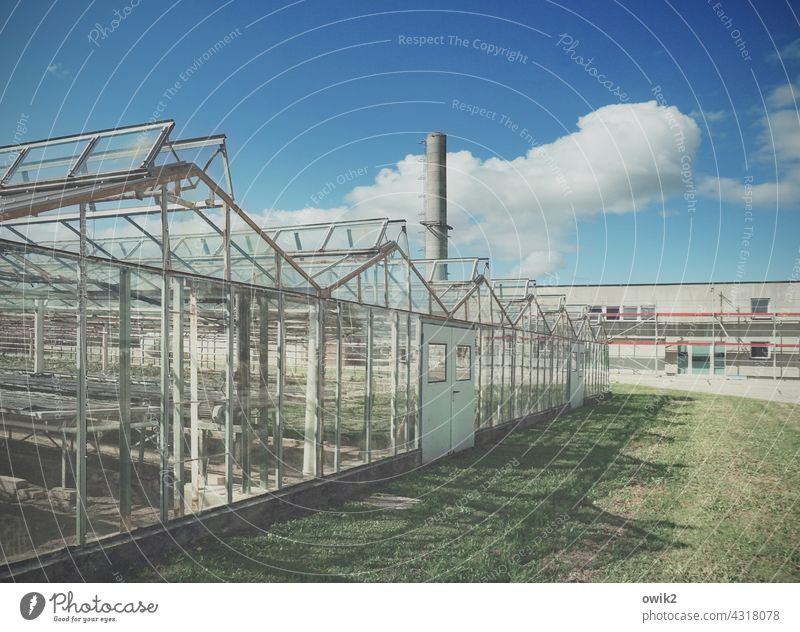 Glass factory Greenhouse Metal Colour photo Construction Transparent Change Transience Decline Old Sharp-edged Building Exterior shot Central perspective