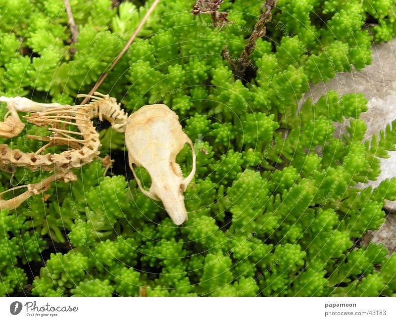 skeleton of a mouse Skeleton Green Spinal column Transience Ribs Death's head gnawed