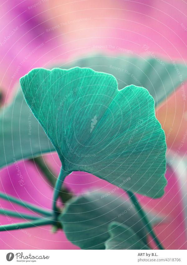 Ginkgo in colorful Image editing Ginko ginkgo leaf Leaf leaves Nature background
