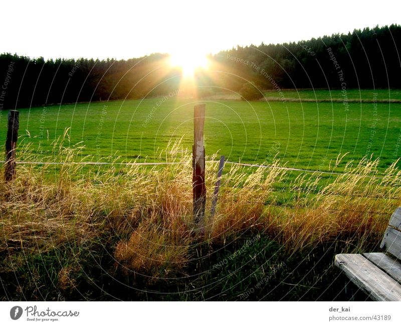 It's always the sun Fence Fence post Barley Wheat Vantage point Forest Meadow Sunbeam Sky Pasture Lighting