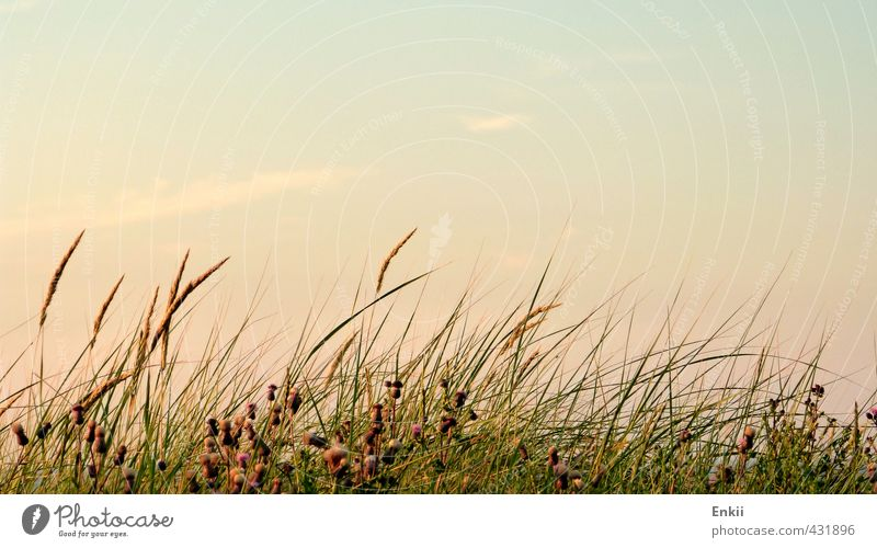 dune grass Summer Summer vacation Beach Island Nature Plant Sky Sun Sunrise Sunset Beautiful weather Grass Coast North Sea Growth Warmth Blue Green Violet