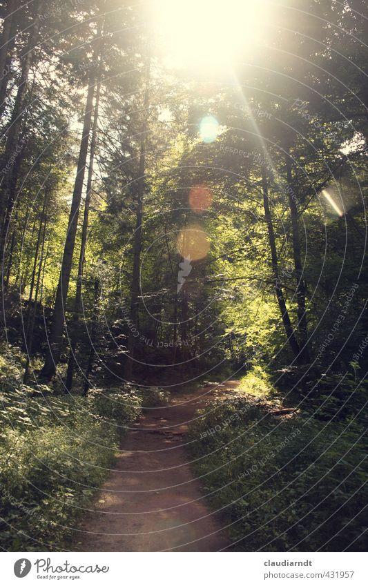 forest light Summer vacation Hiking Environment Nature Plant Sun Beautiful weather Warmth Tree Grass Forest Black Forest Green Freedom Lens flare Glare effect