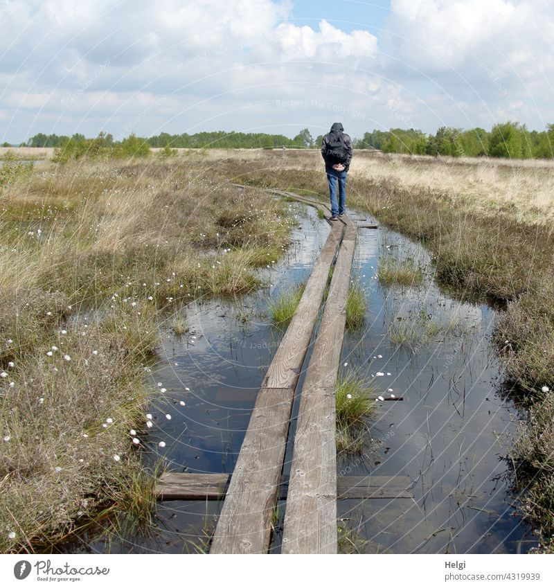 on the wooden path - back view of a man walking in the moor on a wooden path surrounded by water Bog moorland Human being Man Rear view Wood wooden walkway