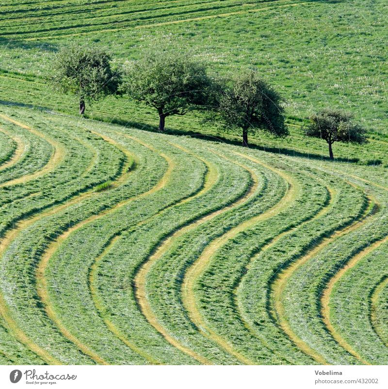 Meadow cuttings Agriculture Forestry Environment Nature Landscape Summer Tree Grass Field Line Natural Green Willow tree Reap Tractor track Illustration Curve