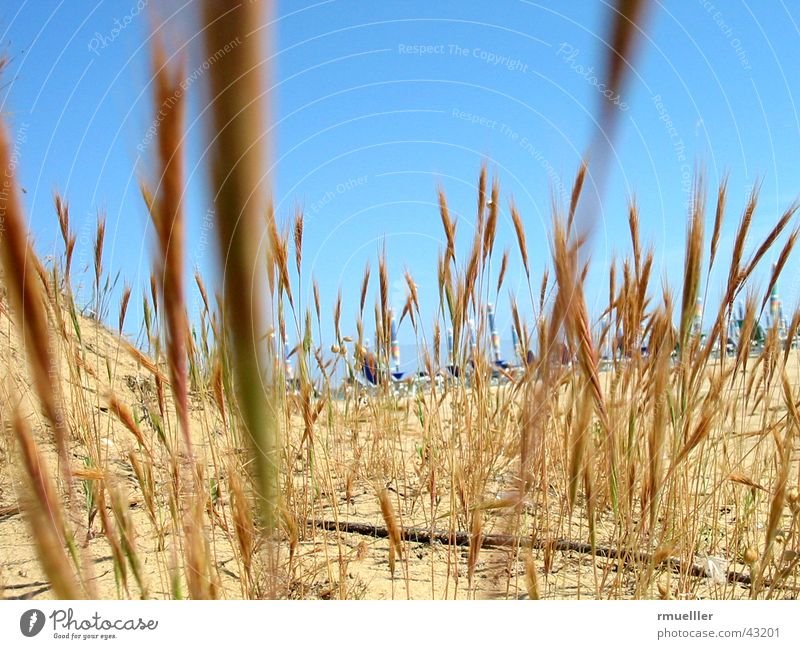 Dry and Thirsty Beach Grass Vacation & Travel Ocean Italy Hot Summer Sand Sky Nature Life