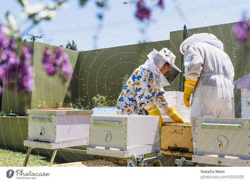 Beekeeper controlling beehive and comb frame woman food summer nature spring beekeeper honeycomb farm people beekeeping apiarist agriculture apiary apiculture