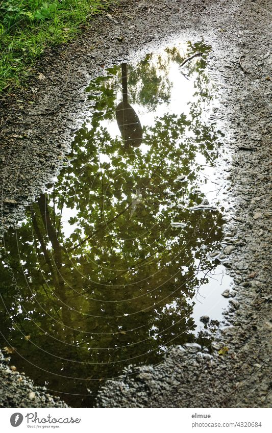 The crown of a maple tree and a round traffic sign are reflected in a puddle on a country lane. Puddle Water reflection Treetop off the beaten track Wet