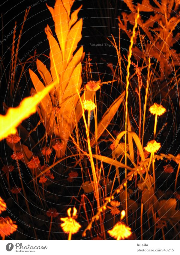 it doesn't always have to be green... Grass Light Night Visual spectacle Macro (Extreme close-up) Enchanted forest Plant Nature car hall Filter Lighting Orange