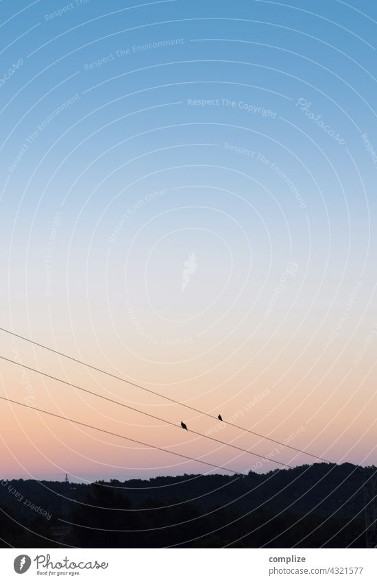 In between tweeting for two birds Evening power line Bird Vantage point Landscape Nature stream Power lines Songs