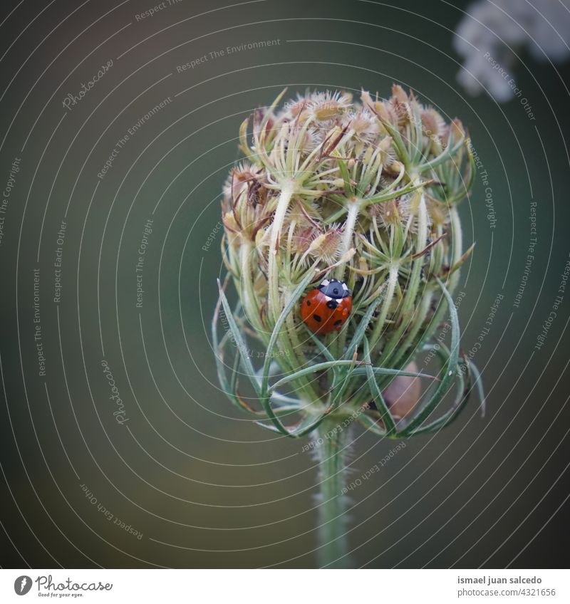 little ladybug on the green flower red insect wings animal plant garden nature outdoors background beauty fragility elegant small wildlife grass spring