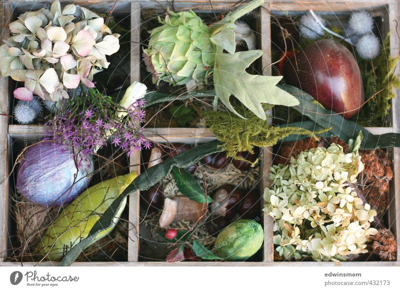Green Plant Animal Leaf Autumn Blossom Natural Garden Dream Moody Leisure and hobbies Living or residing Decoration Blossoming Romance Kitsch