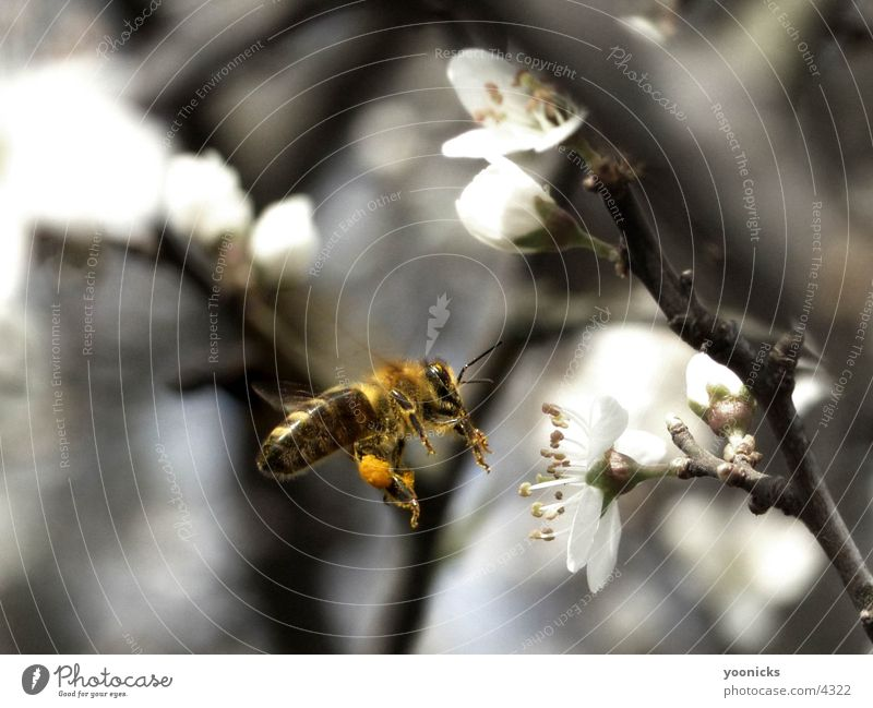 bee Bee Insect Nature Exterior shot
