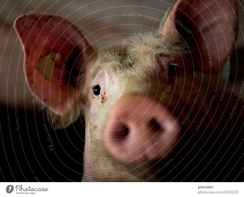 Animal Emotions Death Happy Moody Friendship Sign Curiosity Agriculture Interest Farm animal Swine Socket Love of animals 300 Swinishness
