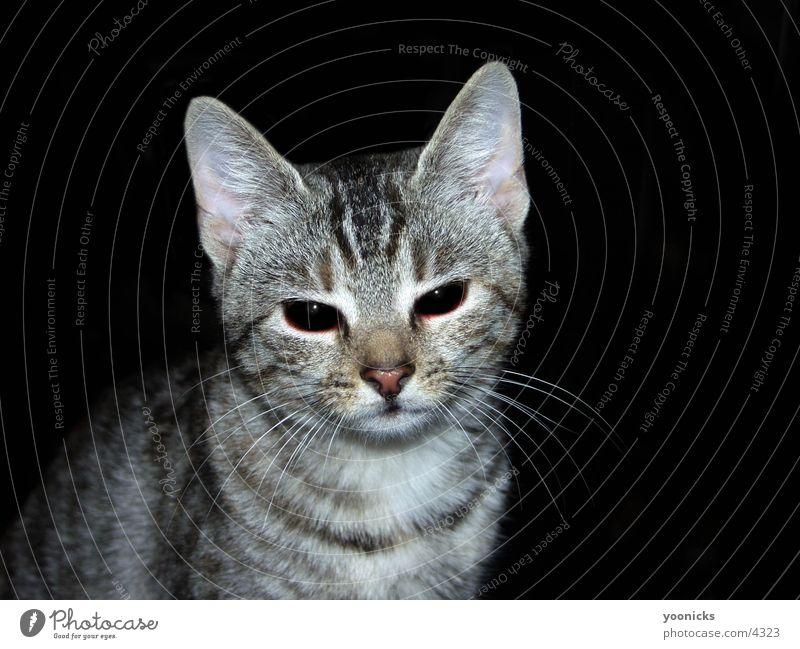 Cat Bitter