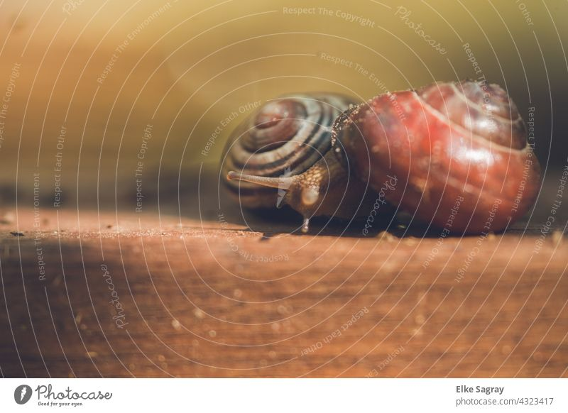 Babes _ Cuddling On A Brown Board In The... snails Snail shell Mollusk Animal Close-up Feeler Deserted Colour photo Shallow depth of field Day