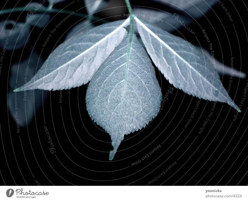 leaf Leaf Nature