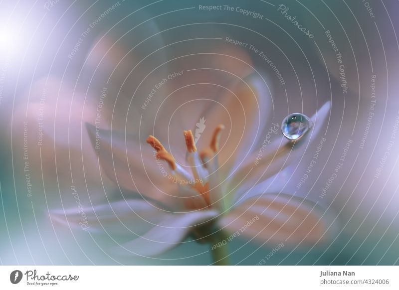 Beautiful macro shot of magic flowers.Border art design. Magic light.Extreme close up macro photography.Conceptual abstract image.Green and White Background.Fantasy Art.Creative Wallpaper.Beautiful Nature Background.Amazing Spring Flowers.Water Drop.