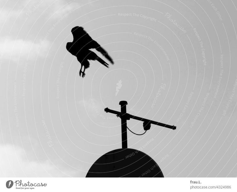 departure Common buzzard Antenna Bird Sky Bird of prey bird of prey bowl Flying