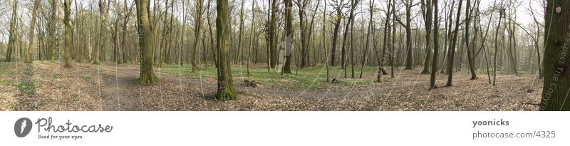 Nature Forest Large Panorama (Format)