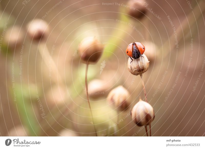 ready to start Nature Plant Animal Summer Garden Beetle Ladybird 1 Brown Green Orange Red Happy Colour photo Deserted Day