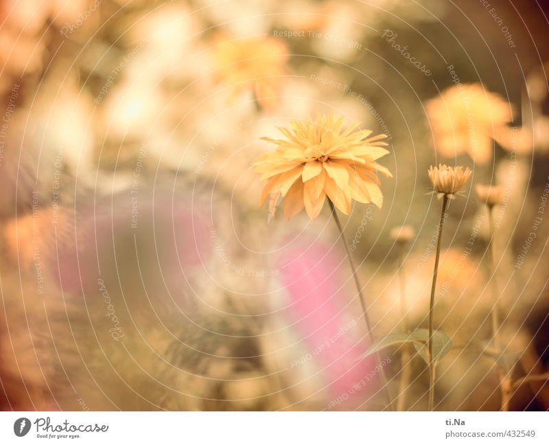 Beautiful Green Summer Flower Leaf Yellow Meadow Blossom Bright Garden Pink Park Growth Bushes Fresh Friendliness