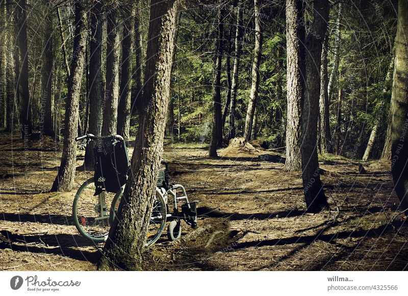 Mobility gaps Wheelchair Forest Spaces forsake sb./sth. Lonely Deserted Coniferous forest tree trunks