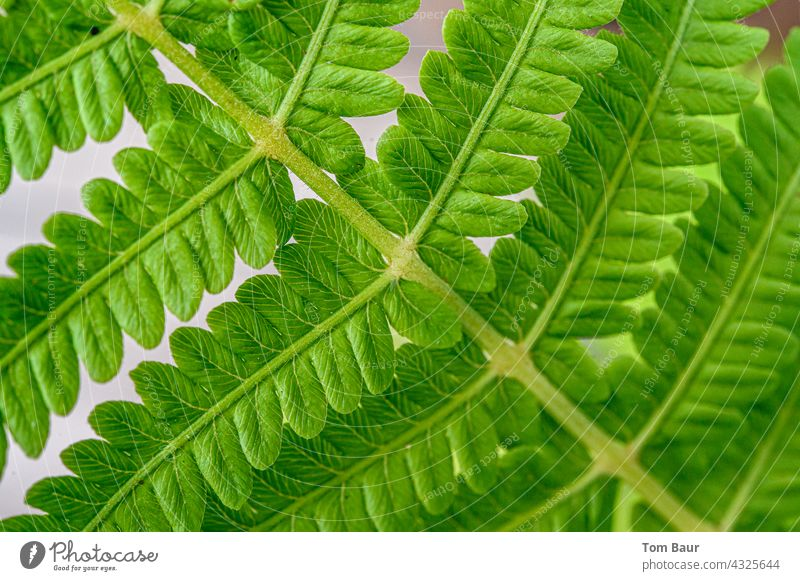 Close up of a fern leaf Fern Leaf Close-up Macro (Extreme close-up) macro Plant Nature Colour photo Detail Green Shallow depth of field Foliage plant Spring