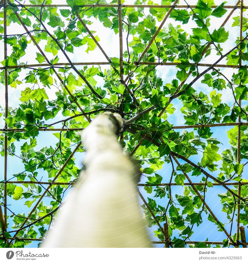 Pointing the way - roof plane growing direction Trend-setting Growth direction of growth Scaffolding Nature Tree Leaf canopy Roof Plane Pattern structure shape