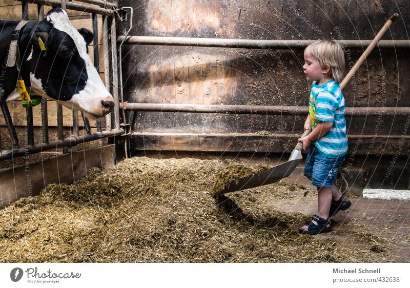 feeding Agriculture Forestry Human being Masculine Toddler Boy (child) Infancy 1 1 - 3 years Animal Farm animal Cow Shovel To feed Feeding Happy Small Cute