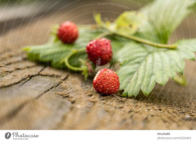 Wild strawberries with text free space wild strawberry Plant Nature Close-up Garden Macro (Extreme close-up) Exterior shot Detail Day Colour photo