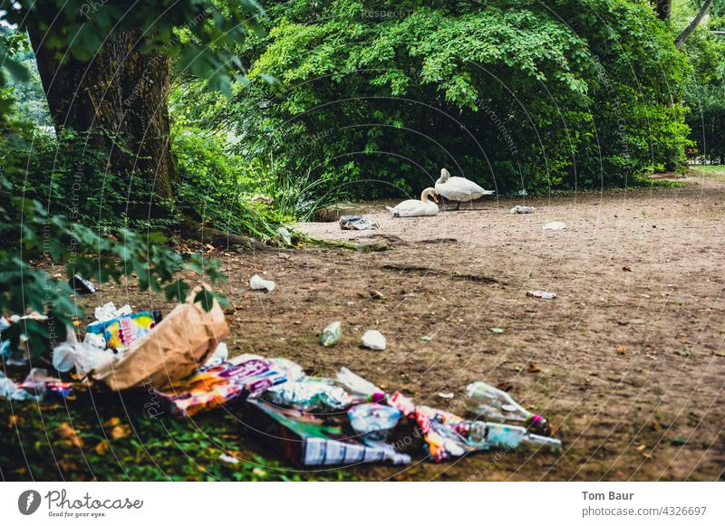 """Garbage in the recreation area after """"Corona Party"""" in the background a pair of swans with chicks Trash Town Colour photo Exterior shot Deserted Dirty"""
