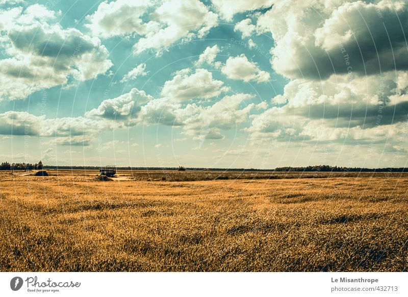 Sky Nature Loneliness Landscape Life Spring Time Earth Dream Contentment Field Authentic Happiness Beginning Joie de vivre (Vitality) Beautiful weather