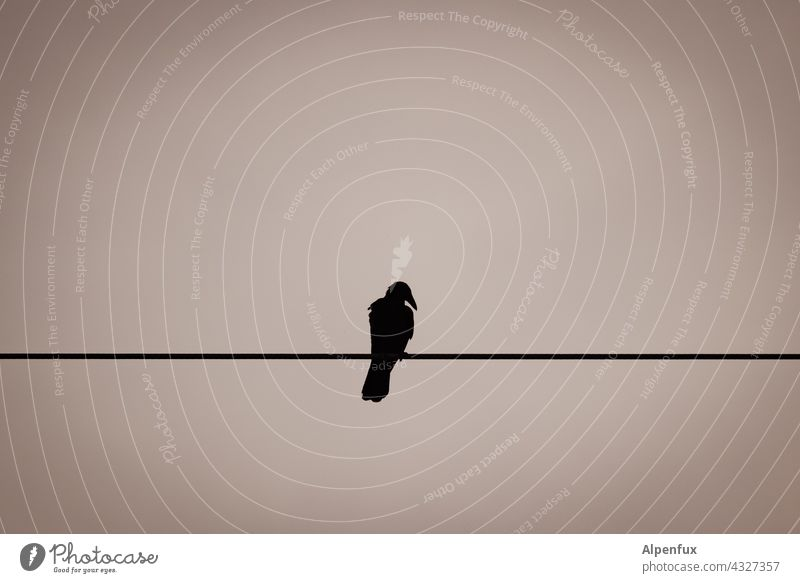 single Crow Bird Raven birds Black Sky Transmission lines High voltage power line Animal Beak Lonely Loneliness on one's own Single