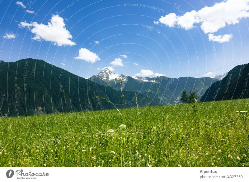 Zillertal Mountain Zillertaler Alps Vacation & Travel Panorama (View) Landscape Sky Nature Peak Hiking Colour photo Trip Day Exterior shot Freedom