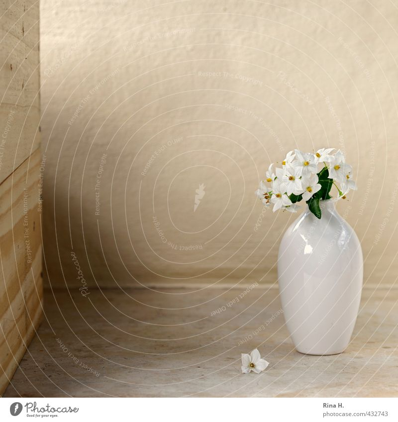 Still Flower Blossom Blossoming Faded Bright Transience Vase White Still Life Solanaceae Colour photo Copy Space top Copy Space middle Shallow depth of field