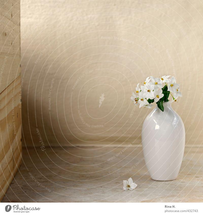 White Flower Blossom Bright Transience Blossoming Still Life Vase Faded Solanaceae
