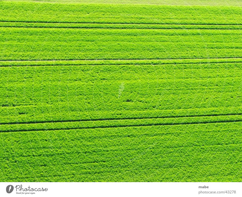 Nature Green Spring Landscape Field