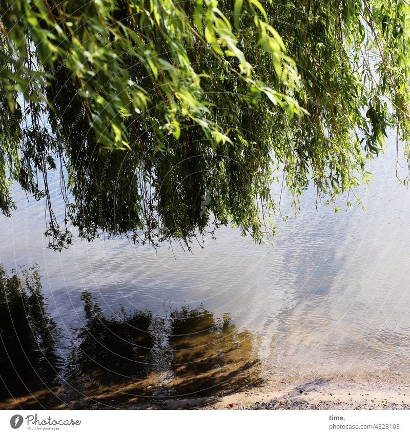 ParkTourHH21   Willow by the Lake Willow tree Weeping willow Water bank Leaf canopy reflection Tree Doomed Relaxation recover Break Tabloid tranquillity silent