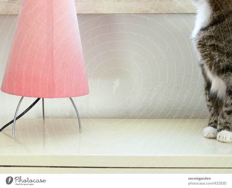 skilfully bypassed the modelrelease :) Living or residing Flat (apartment) Lamp Table Room Animal Pet Cat Pelt Paw Crouch Wait Bright Soft Pink White