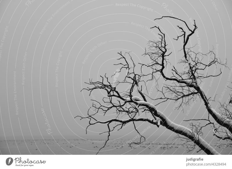 Snow covered bare branches of a tree by the lake on a gloomy winter day Tree Bleak bare tree Winter Lake Landscape Dreary Gray Gloomy Water Nature Fog
