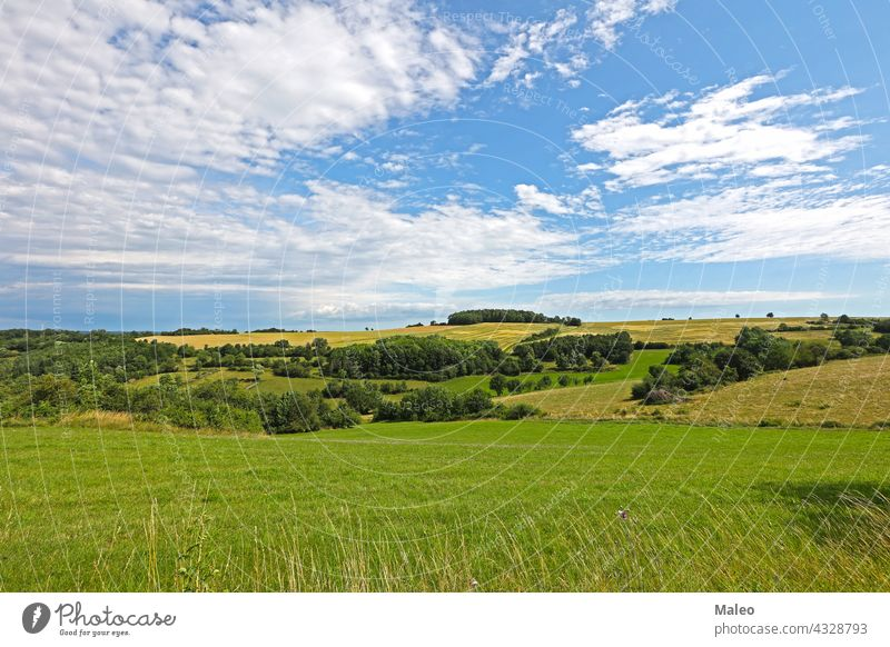 July. Summer landscape with fields and meadows. summer july nature season agriculture blue countryside sky farm farming rural tree flower poppy cereal wheat