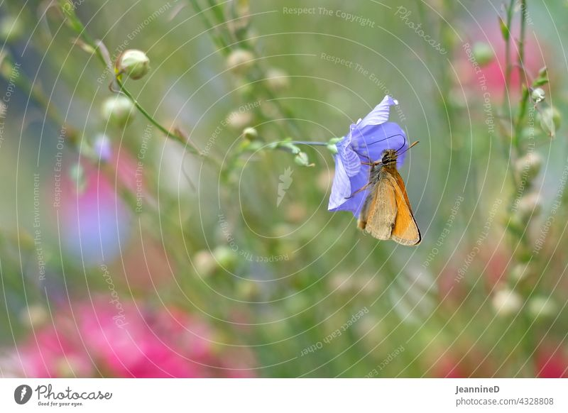 orange butterfly on lilla flower Pink Flower Blossom pretty blurriness in the foreground Blossoming Colour photo Interior shot Nature variegated cheerful Day